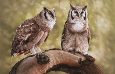 Giant eagle Owl pair