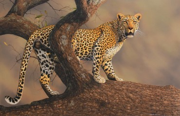 Matimba - Leopard at Sabi Sand