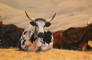 Nguni herd - oil
