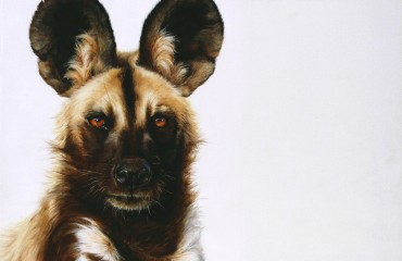 African wild dog oil .