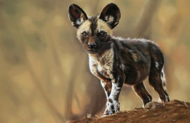 Ingrid_wild_dog_pup_1800