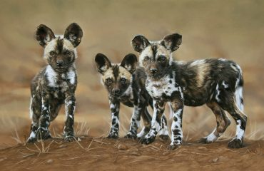 Ingrid_wild_dog_pups_1920
