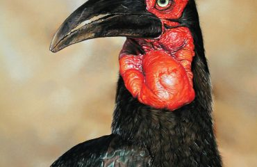 Ingrid_Ground_hornbill_1000