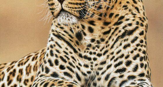 Leon_male_leopard_1200