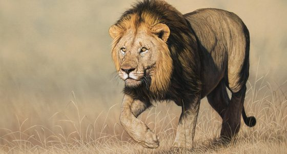 Leon_stalking_lion_1920