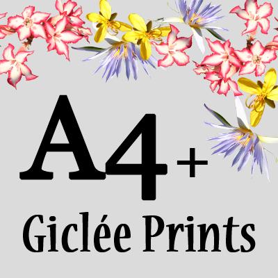A4+ Giclée prints