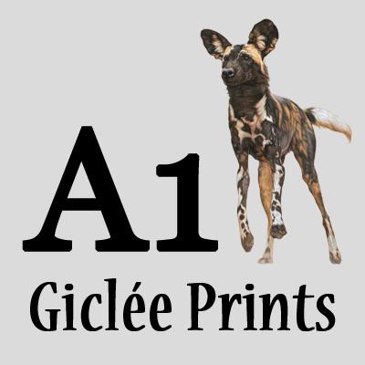 A1 Giclée Prints